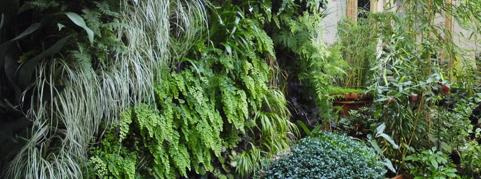 La luxuriance d'un mur végétal dans une cour parisienne