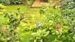 3 mois après la plantation, la petite terrassedu fond est dissimulée par la végétation.
